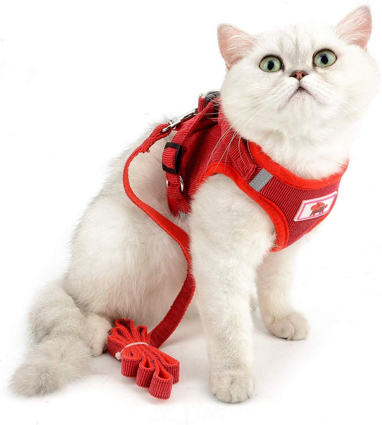 Cat in ESA vest