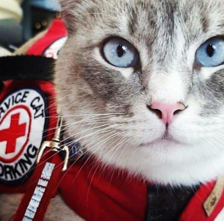 Cat vest of emotional support