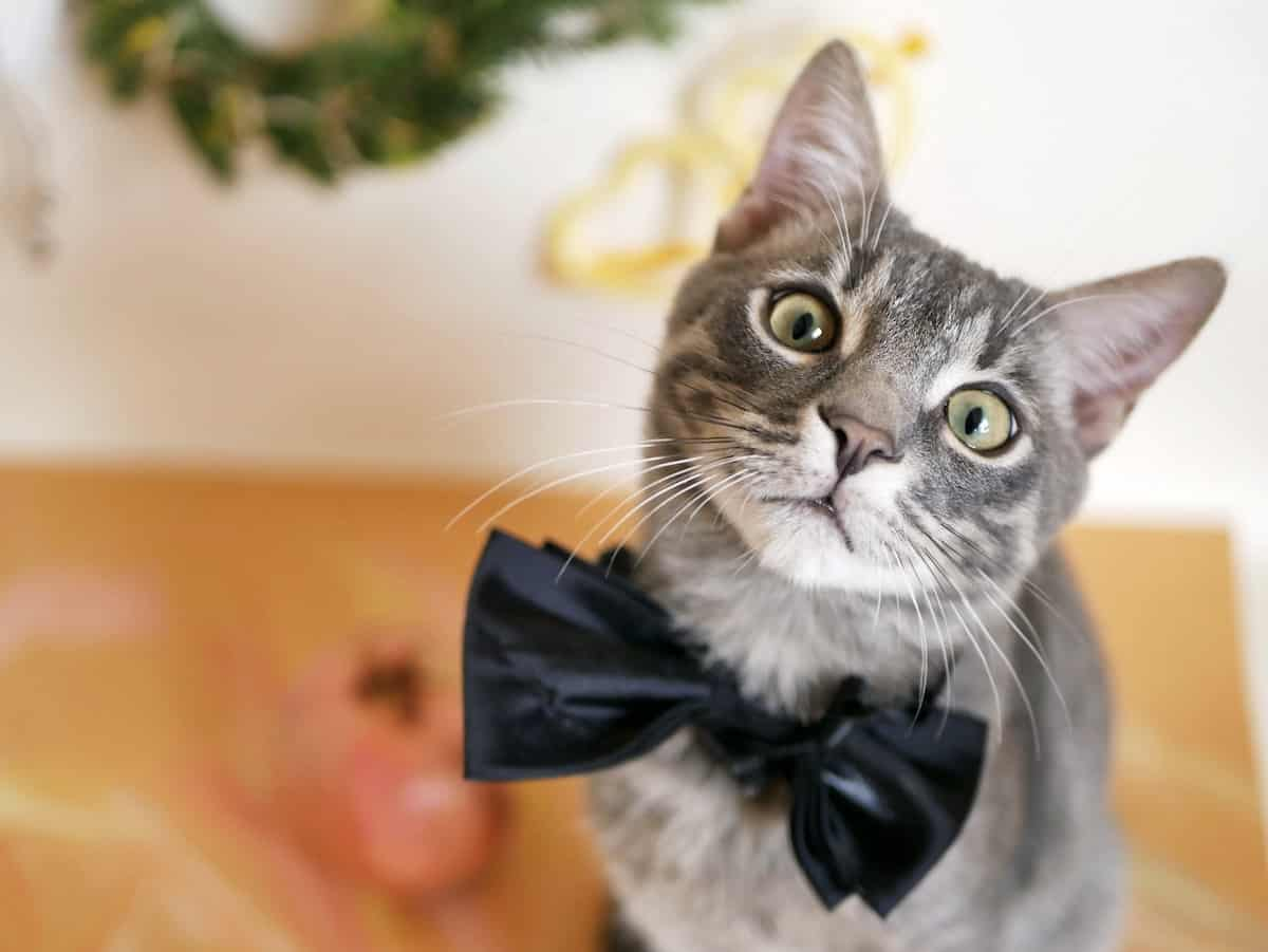 ESA cat registration