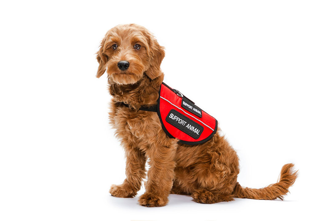 What is an emotional support dog vest?