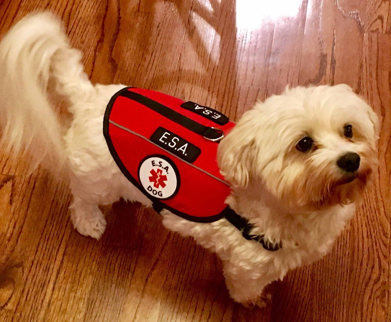 What types of emotional support dog vests are there?
