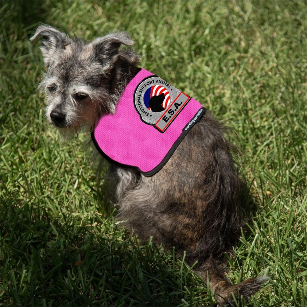 Where to buy an emotional service dog vest?