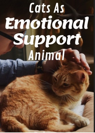 Cats as emotional suppurt animal