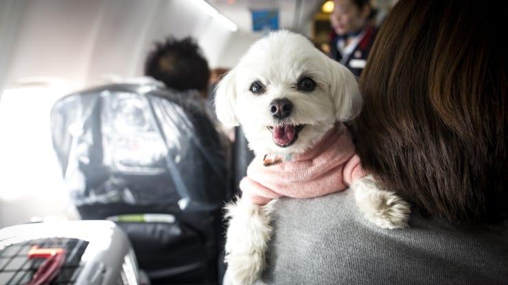 Registration of ESA dogs for flights