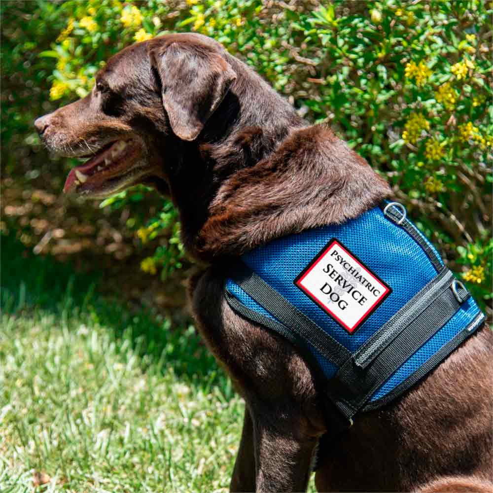 what is a service dog vest?
