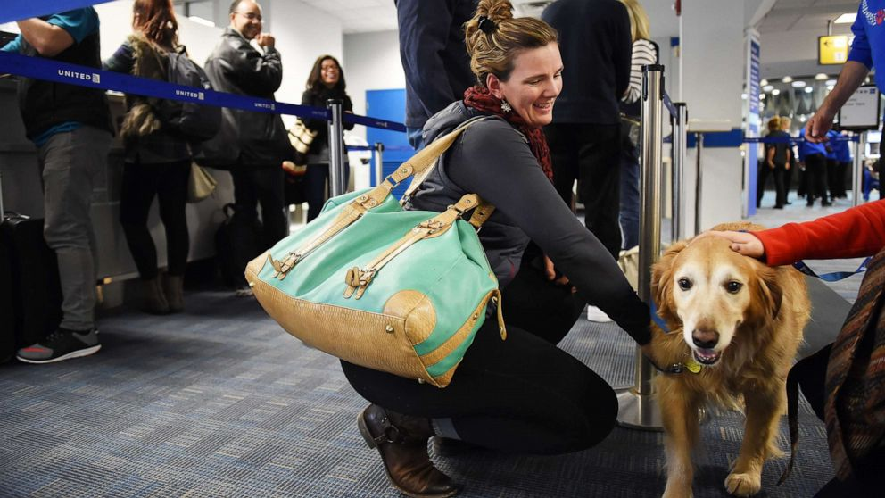 ESA Dog in airlines