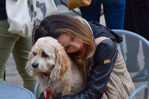 Laws on emotional support animals