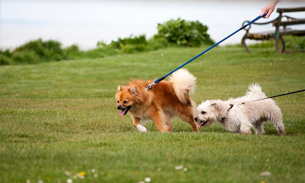 hardest dog breeds to train